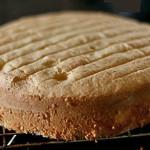 Basic Sponge Cake Recipe